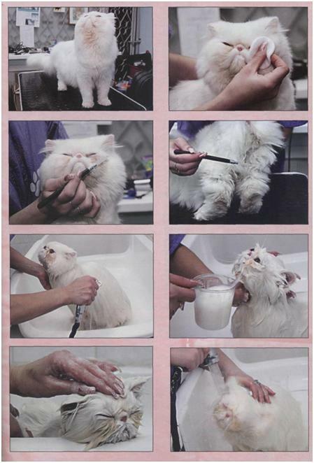 Как постричь кошку — порядок действий и виды стрижек