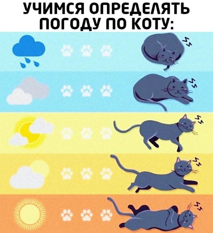 Какие животные — предсказатели погоды?
