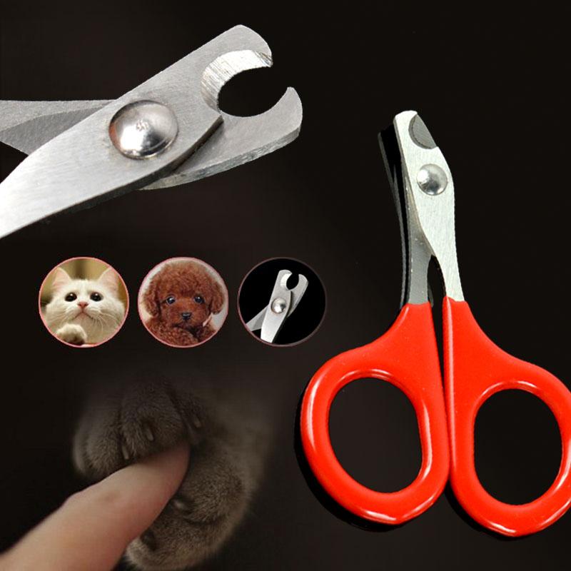 Как подстричь когти собаке в домашних условиях: инструкция, фото и видео