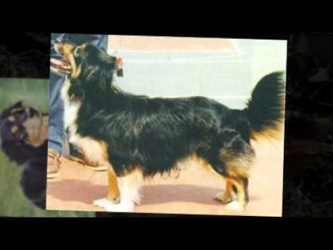 Греческая порода собак алопекис