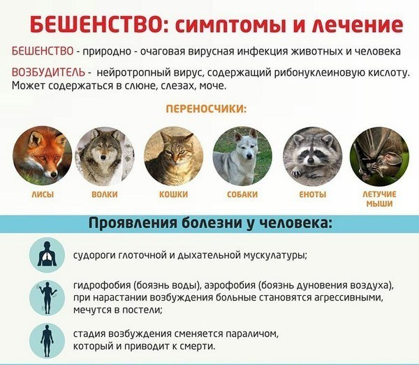 """Какими глистами можно заразиться от кошки: лечение, симптомы, профилактика, сдать анализы   гуз """"больница № 18"""""""