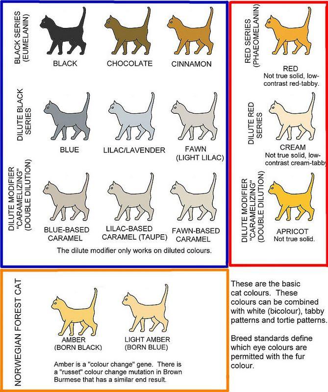 Как назвать кошку: топ лучших кличек и имен с советами, как оригинально назвать кошку или кота