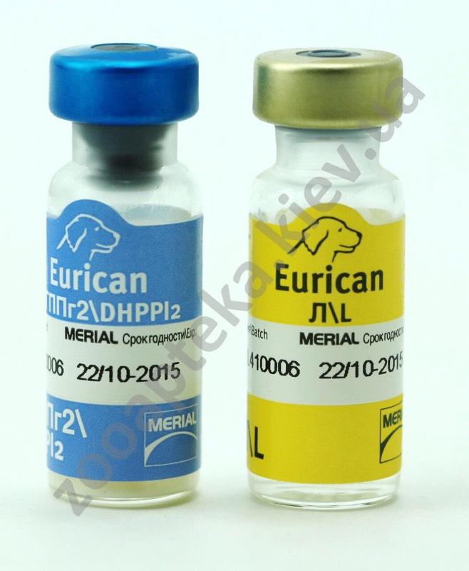 Эурикан для собак: инструкция по применению вакцины от бешенства, схема вакцинации и дозировка, противопоказания
