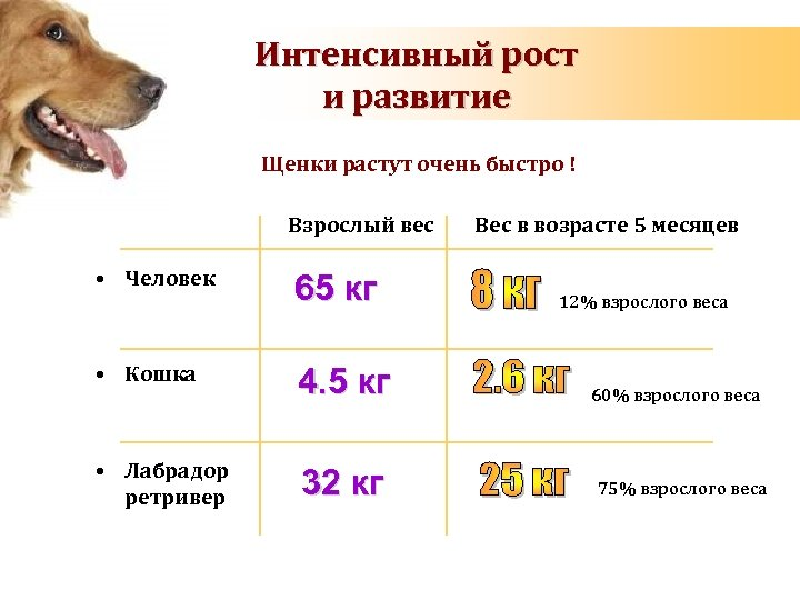 Вес щенка немецкой овчарки по месяцам с подробным описанием
