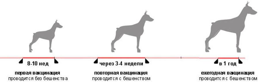 Могу ли я вывести щенка на улицу без прививок?