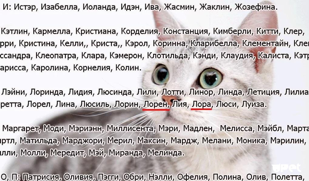 Имена и клички для кошек и котов на английском языке