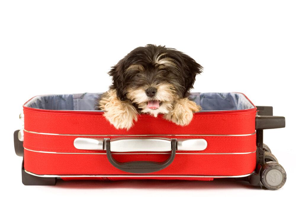 Кому доверить животное на время отпуска?????7 вариантов в москве | invme