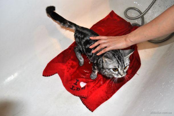 Можно ли купать кошку человеческим шампунем?