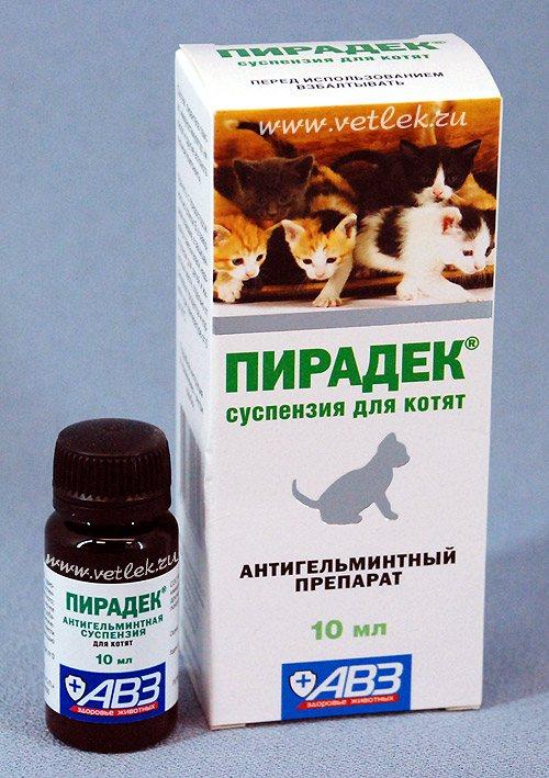Можно ли глистогонить беременную кошку: применять таблетки и другие лекарственные средства, возможные последствия