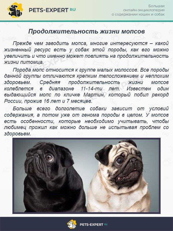 Чем кормить мопса? правила питания щенков и взрослых собак. рацион щенков от 2 месяцев, прикорм от 3 недель