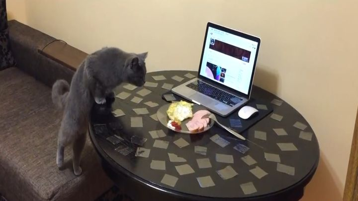 Находим решение, как отучить кошку лазить на стол