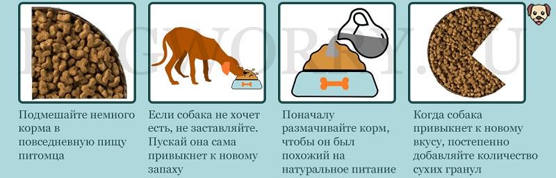 Как отучить кошку от кошачьего корма?