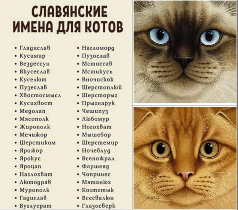 Как назвать котенка — мальчика или девочку — по окрасу, характеру, гороскопу и не только
