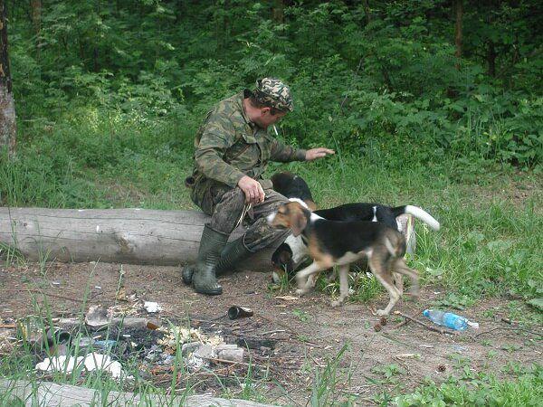 Особенности характера и воспитание русской гончей