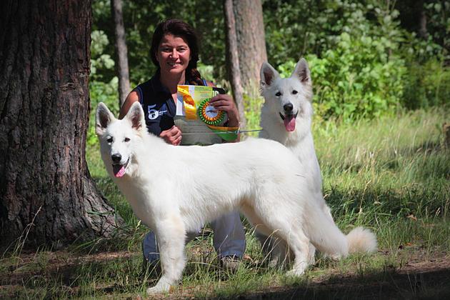 Характеристика собак породы белая швейцарская овчарка с отзывами и фото