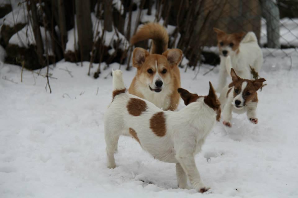 Породы собак долгожителей