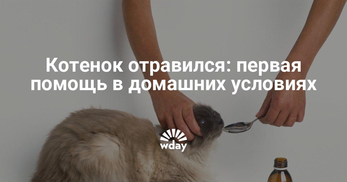 Отравление у кошек: [как понять, что делать, чем лечить]