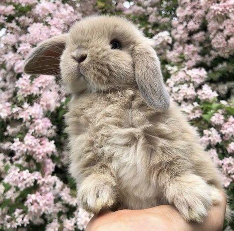 Самые маленькие декоративные породы кроликов в мире: фото, описание