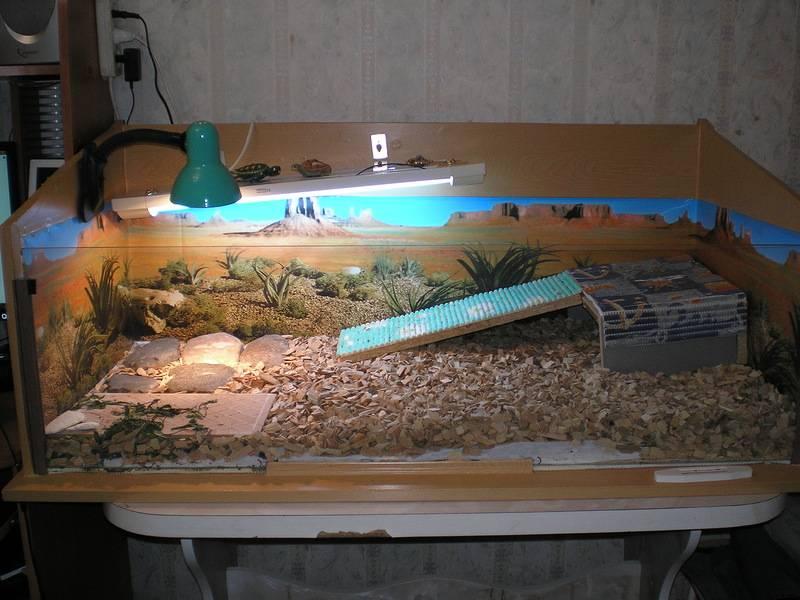 Островок или берег для водной черепахи
