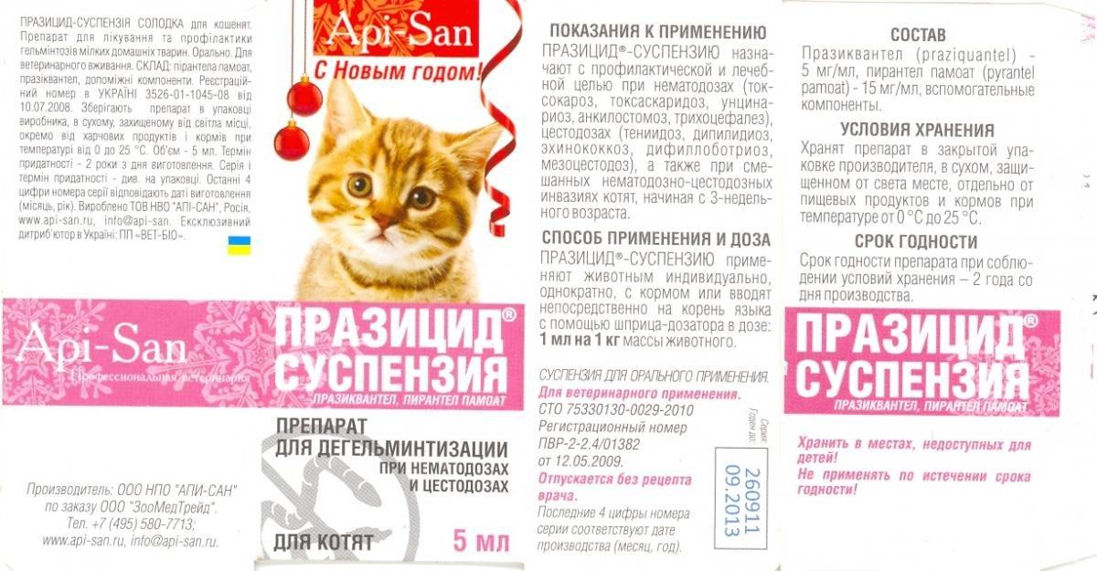 Вязка кошек: правила и советы