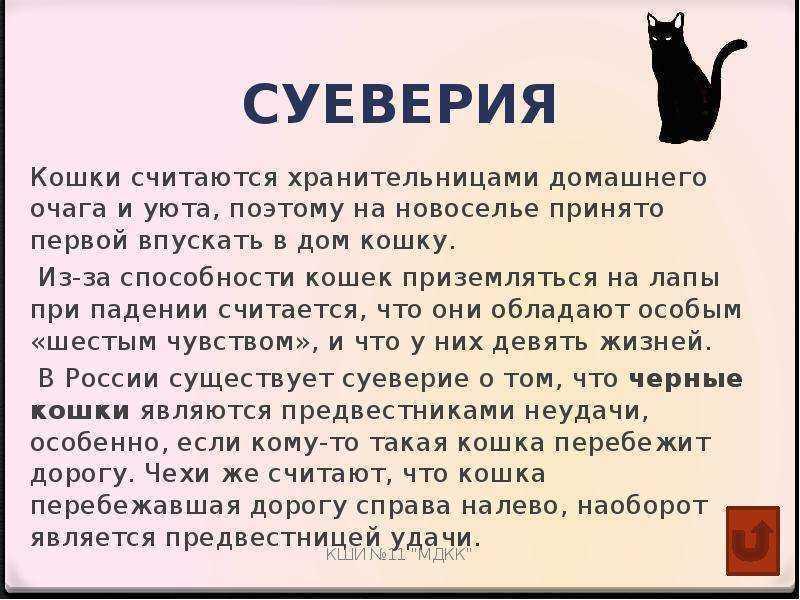 Беда или счастье: что означает примета, когда чужая кошка пришла в дом