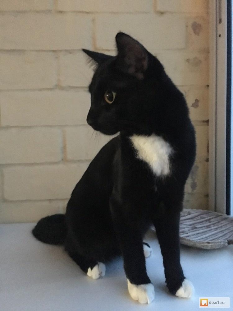 Порода кошек черно белых: выявляем суть