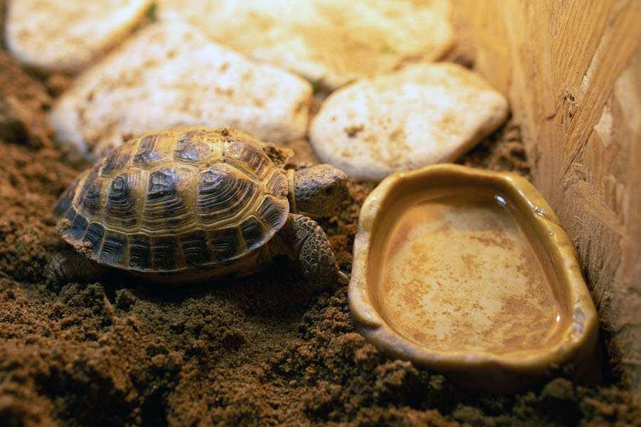 Чем кормить черепах: правила и советы питания, чем и сколько, что нельзя, фото и рекомендации