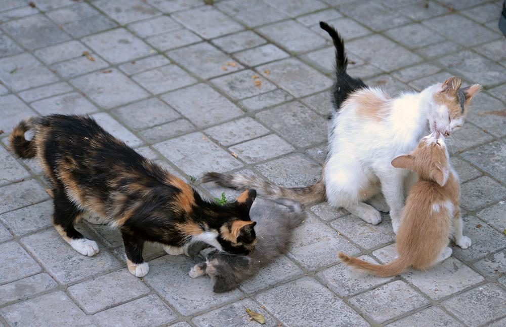Как подружить двух кошек или котов в одной квартире: приемы знакомства и лайфхаки для хозяев