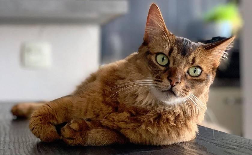 Характеры кошек: виды, темпераменты, примеры пород
