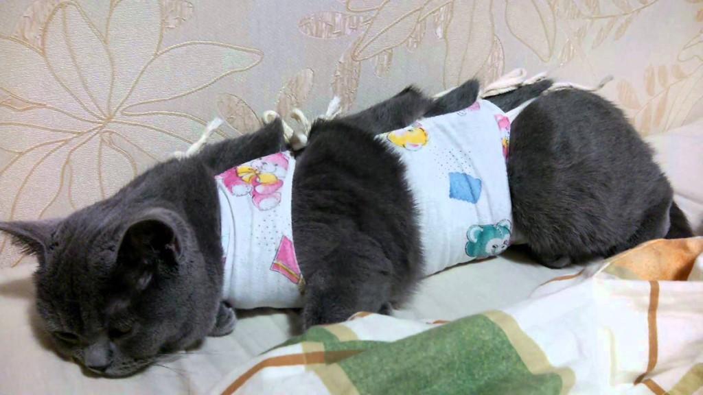 Снятие швов у кошек после стерилизации (операции)