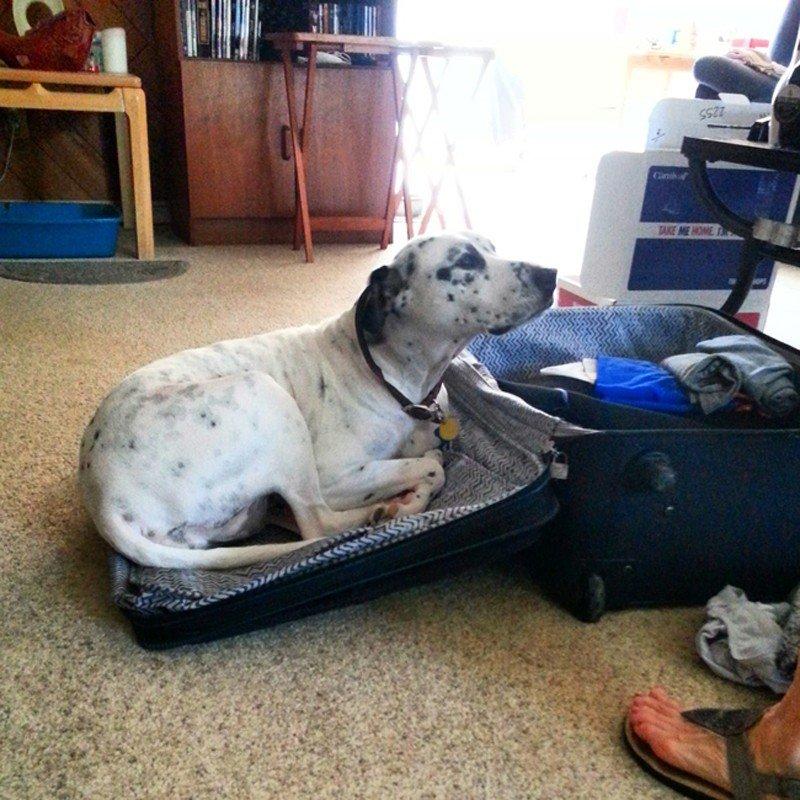 Где и как оставить собаку на время отпуска или внезапного отъезда