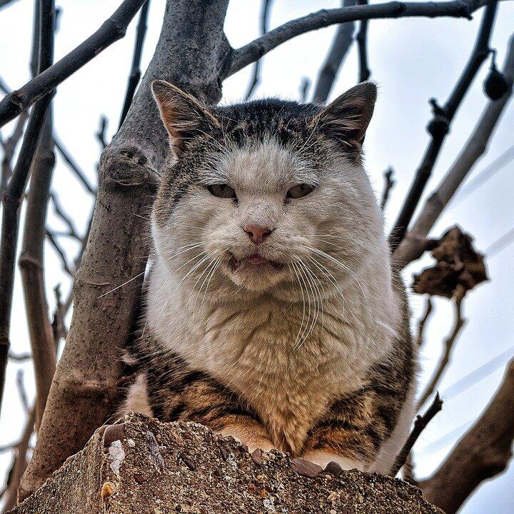 Отличие домашних кошек от уличных