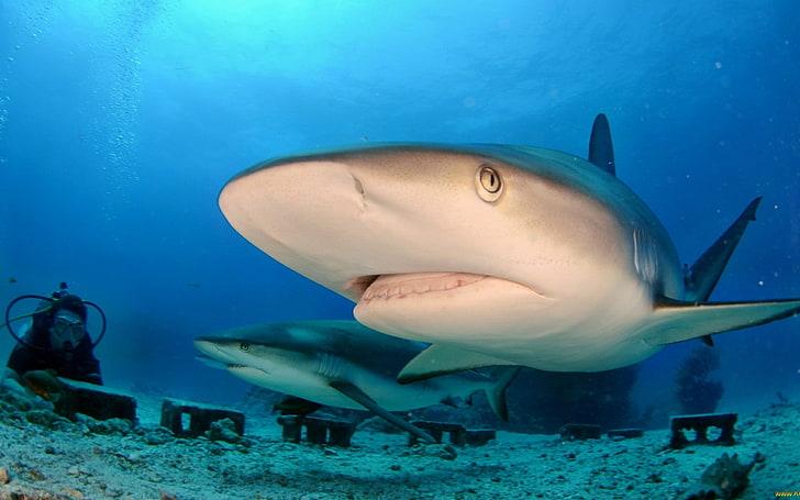 Акулы - самые опасные пляжи и курорты ∞ лагуна акул