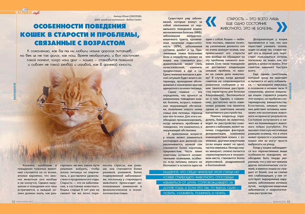 Агрессия у кошки. как хозяину решить проблему
