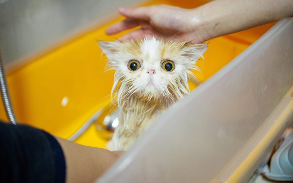 """Почему кошки боятся воды?   блог ветклиники """"беланта"""""""