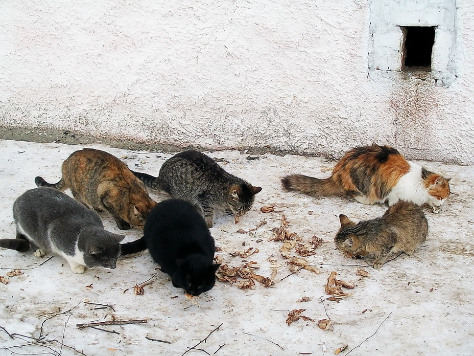 Как пережить Новый год кошкам и собакам дома?