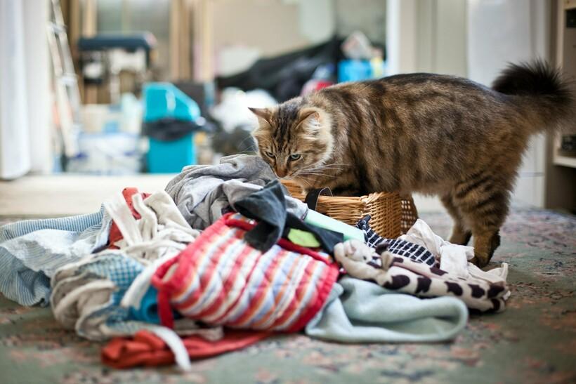 Где кошки больше всего любят, чтобы их гладили?