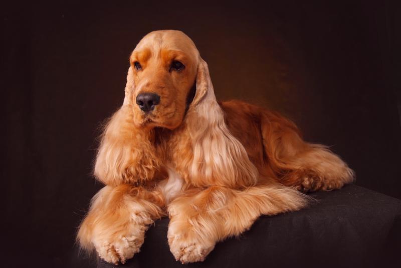 Охотничьи породы собак. описания, названия и виды охотничьих собак | живность.ру