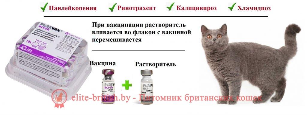 Когда делать прививки котятам