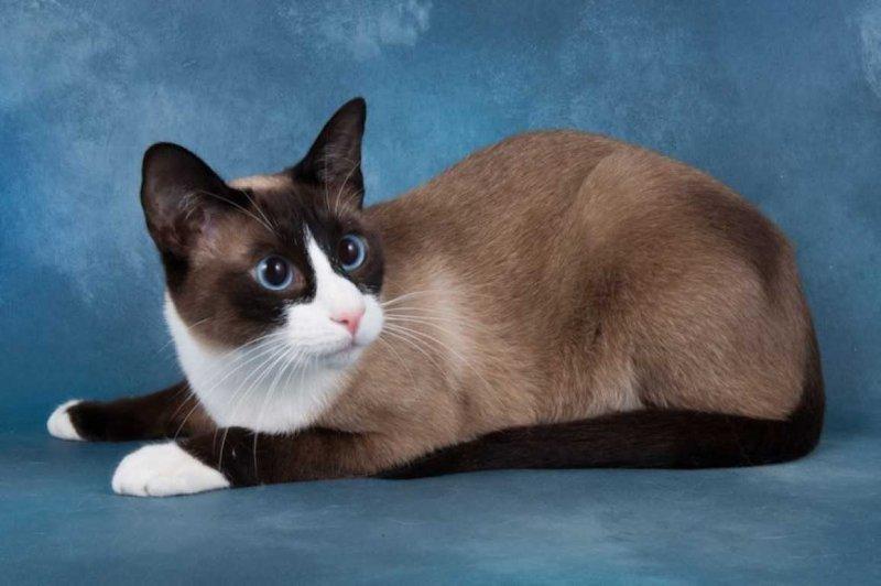 Самые красивые породы кошек с фото и названиями