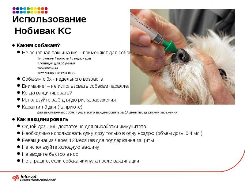 Через сколько дней можно гулять с собакой после второй прививки нобивак