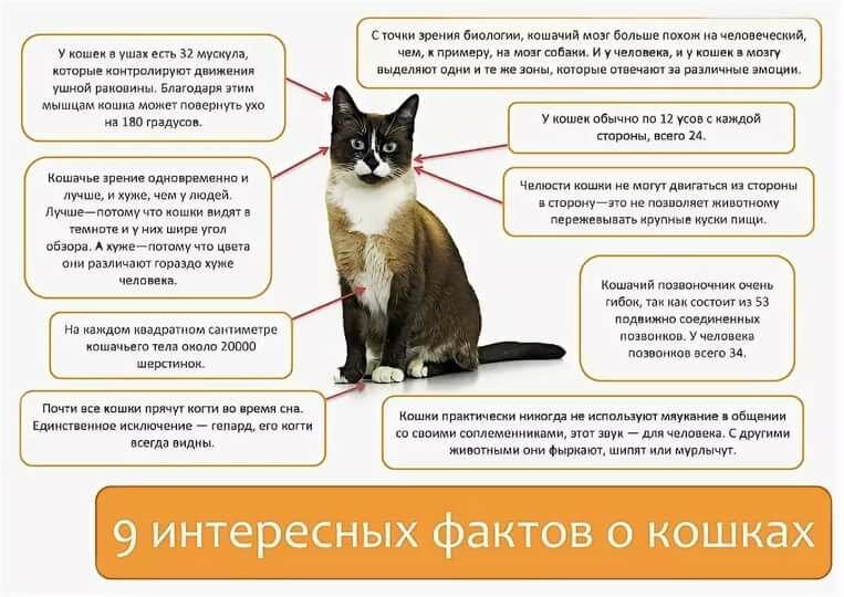 Пять самых частых болезней кошек