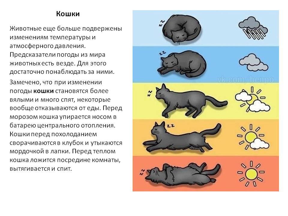 Животные – предсказатели погоды