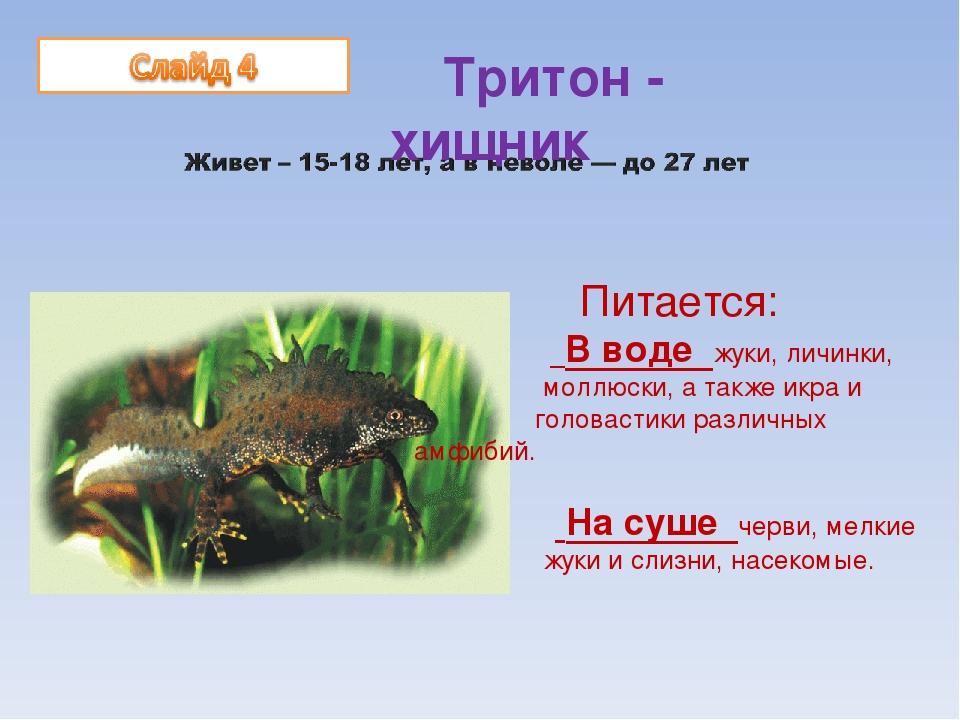 Тритоны в аквариуме: содержание в домашних условиях, питание (кормление), уход за животным, сколько живут, размножение