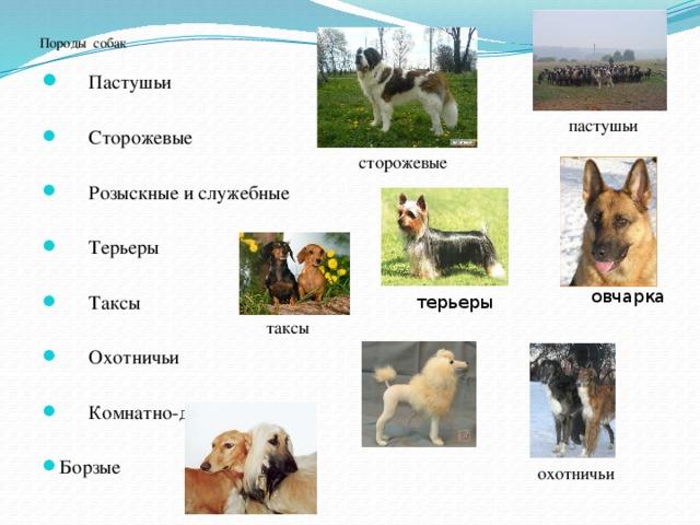 Розыскные собаки: описание, история, особенности, виды.