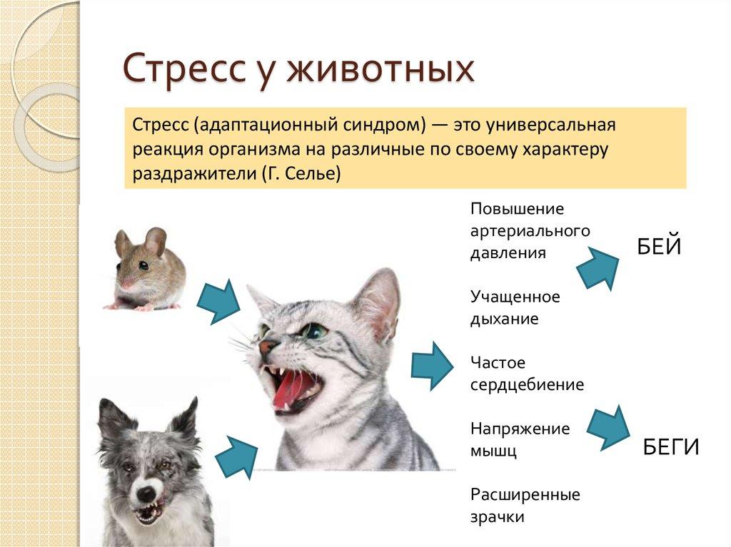 6 причин, почему кошка охраняет хозяина - признаки защиты