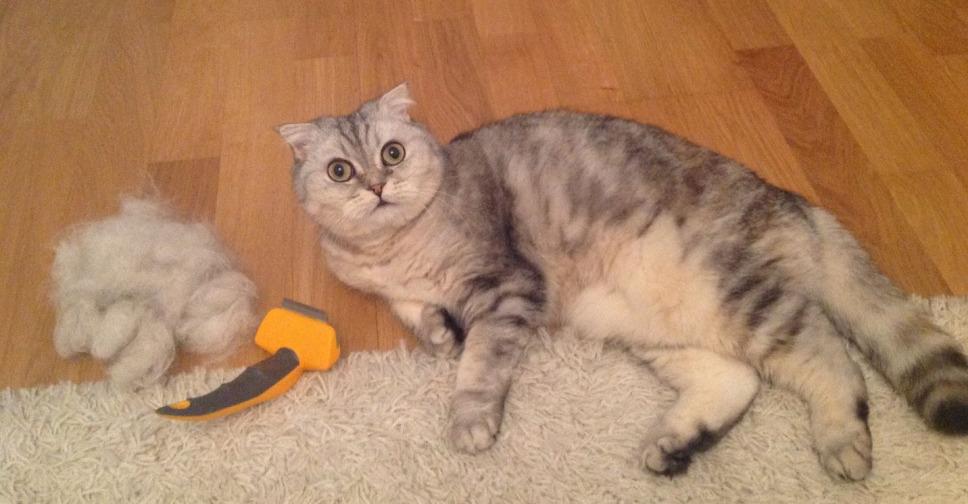 """Почему кошка сильно линяет и что делать?   блог ветклиники """"беланта"""""""