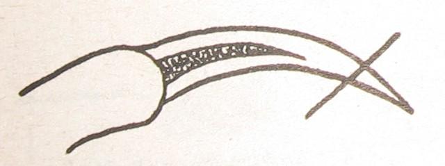Пошаговая инструкция как самому подстричь йорка