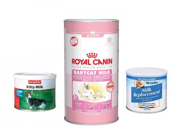 Корм для британских котят: каким кормом лучше кормить британца