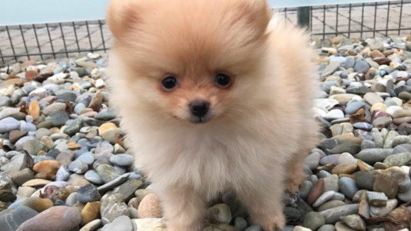 Самые маленькие породы собак в мире: фото, названия, описания